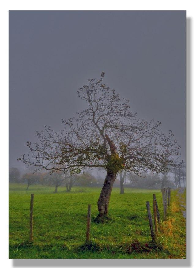 pommes-solitaires