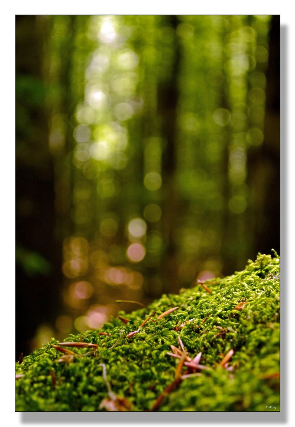 forêt-