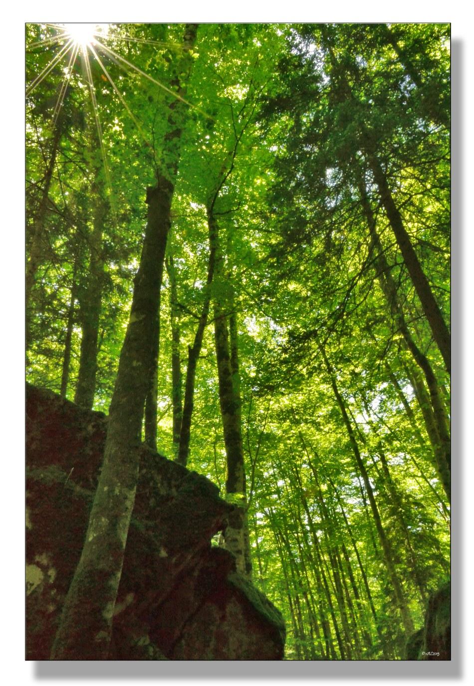 soleil--forestier