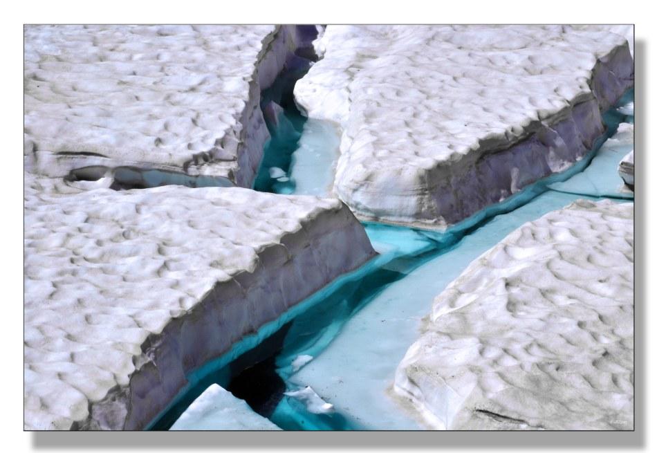 menthe-glaciale