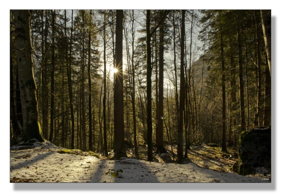 lumière forêt