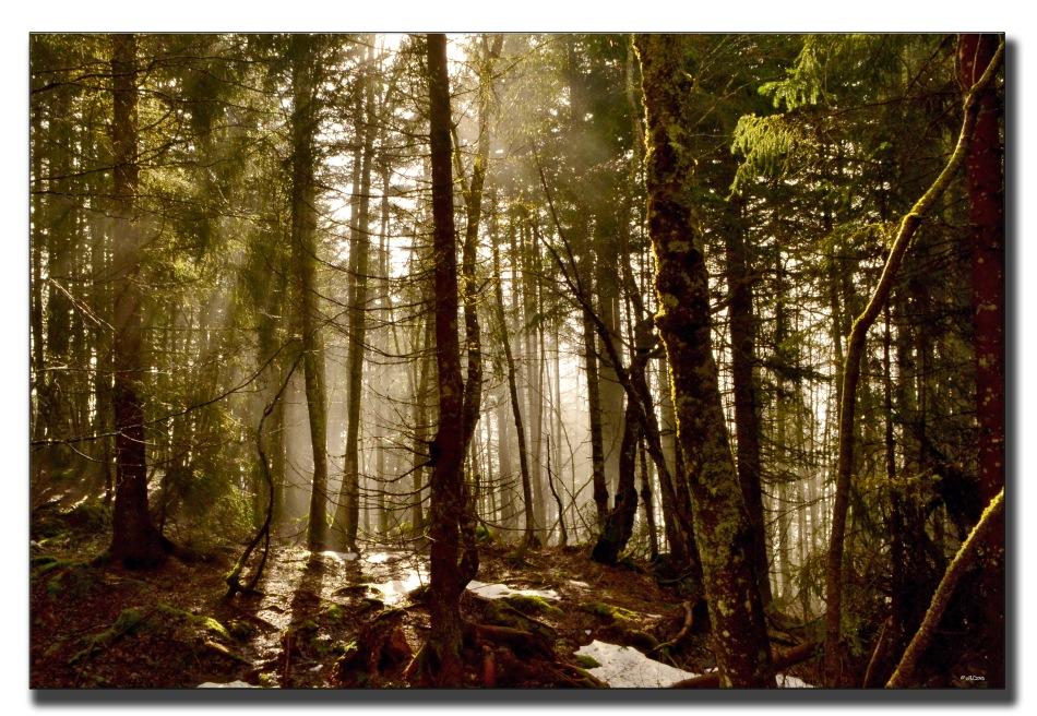 forêt matinale