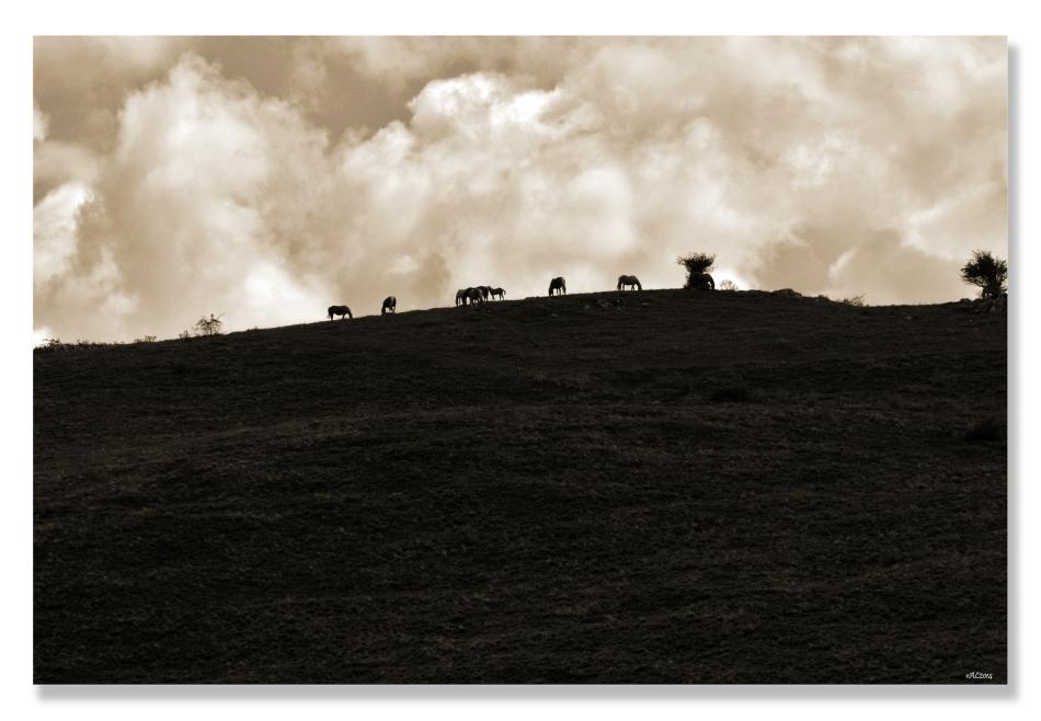 pastoralw