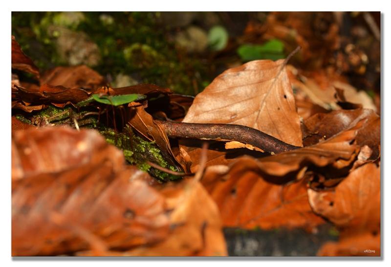 feuilles et bois