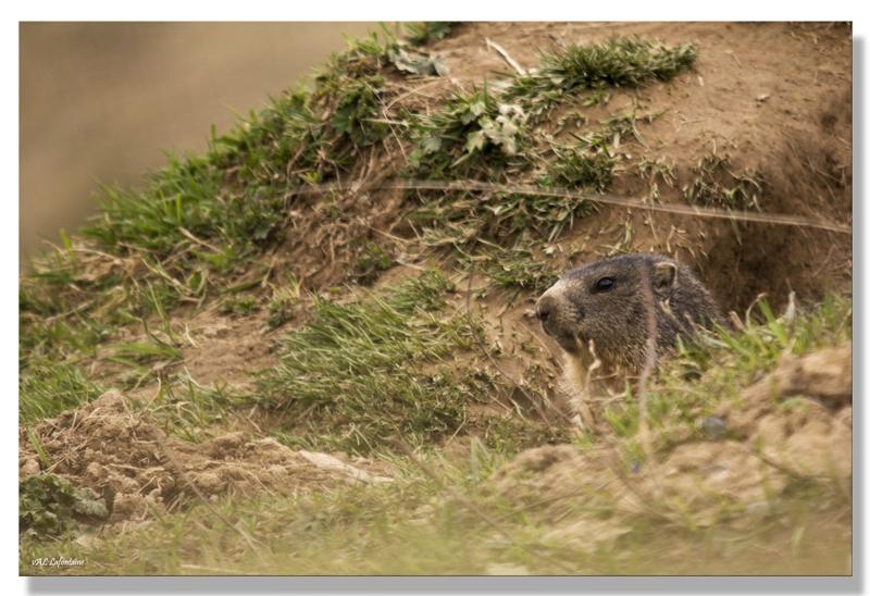 marmotte trou