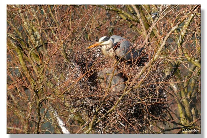 petits nid